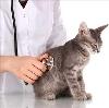 Ветеринарные клиники в Мотыгино